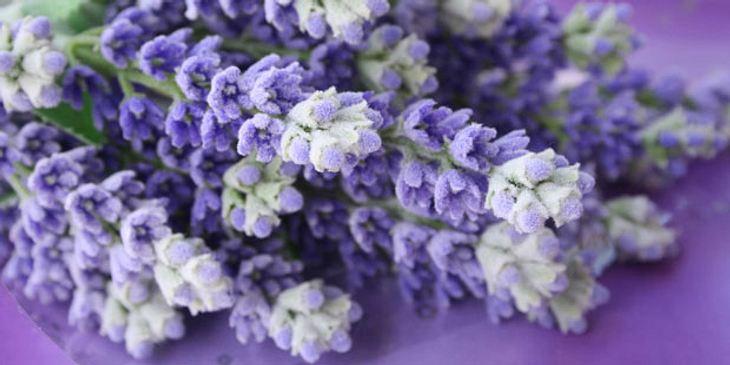 Burnout-Heilmittel Lavendel
