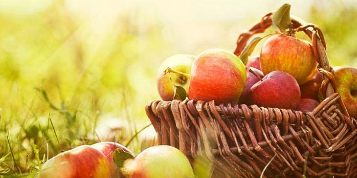 Äpfel beugen Darmkrebs vor