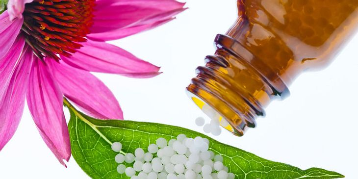 Homöopathie bei Erkältung hilft Echinacea