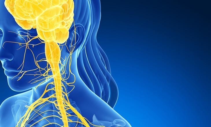 MS Ursache Zentrales Nervensystem