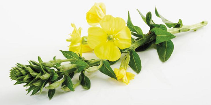 Schluesselblumen bei Nasennebenhöhlenentzündungen