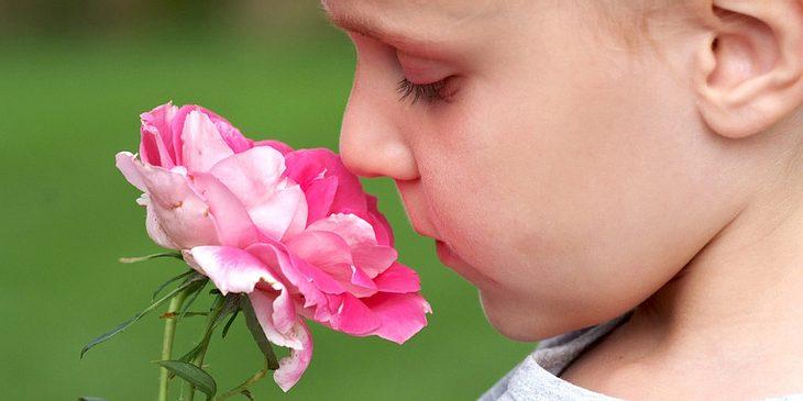 Zinkmangel kann den Geruchssinn einschränken